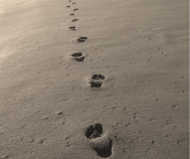 voetverzorging co gerd bioreine
