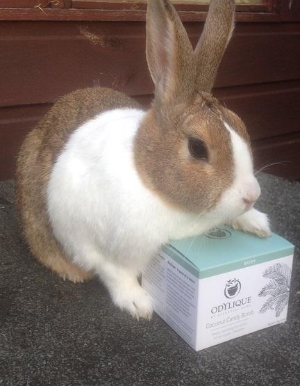 Happy_Bunny odylique