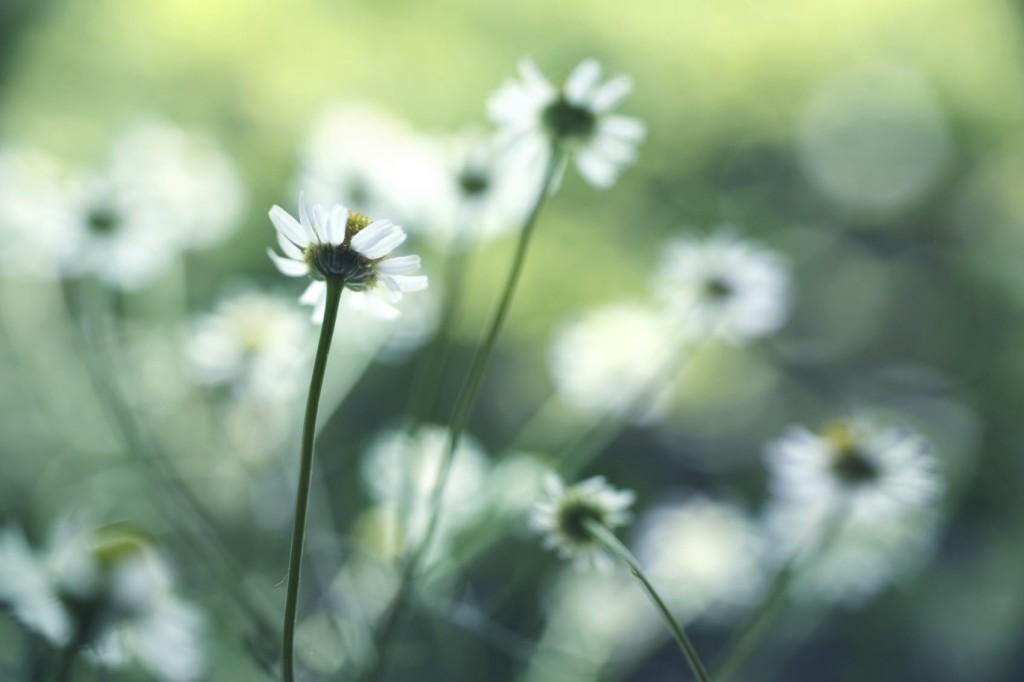 Allergie Planten Huid : Allergie of eczeem gevoelige huid bioreine